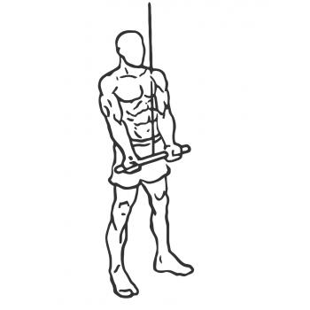 triceps double handed reversed pulldown