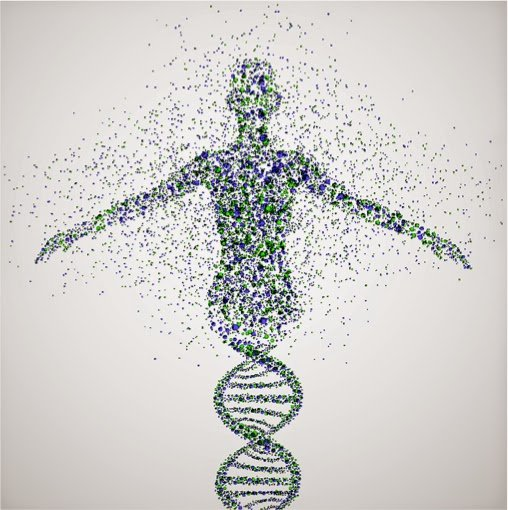 genetic limits