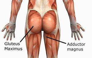 gluteus-maximus trainen