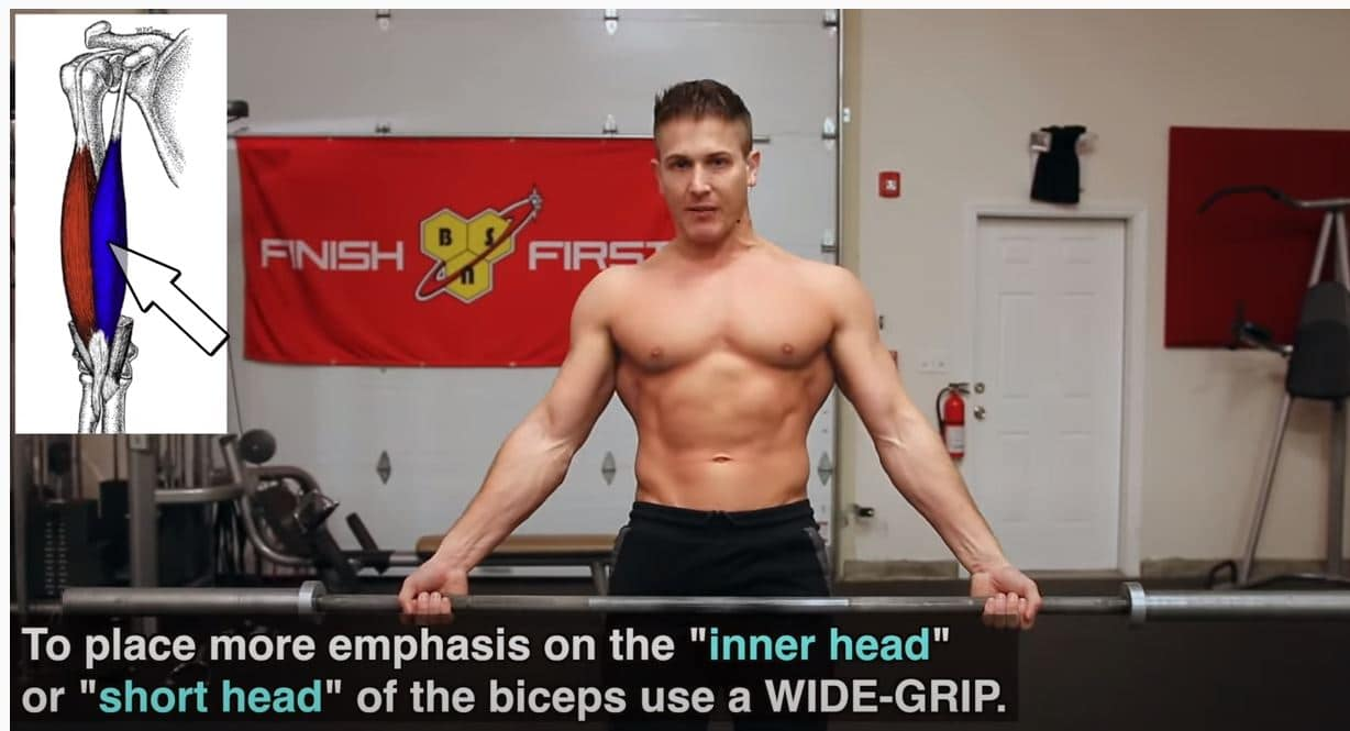 barbell curl breed
